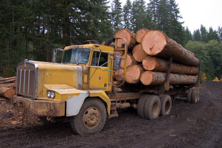 LOADER OPERATOR / TRUCK DRIVER - TIMBER